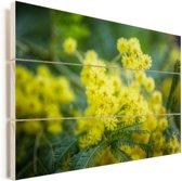 Een piekfijne mimosabloem Vurenhout met planken 120x80 cm - Foto print op Hout (Wanddecoratie)