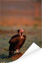 Oorgier tijdens de zonsondergang in Kenia Poster 80x120 cm - Foto print op Poster (wanddecoratie woonkamer / slaapkamer)