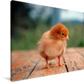 Rood kuikentje op een houten tafel Canvas 160x120 cm - Foto print op Canvas schilderij (Wanddecoratie woonkamer / slaapkamer) / Boerderijdieren Canvas Schilderijen XXL / Groot formaat!