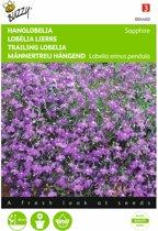 Tuinlobelia Saphir - Lobelia pendula - set van 6 stuks