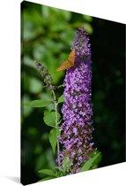 Vlinderstruik in de natuur Canvas 20x30 cm - klein - Foto print op Canvas schilderij (Wanddecoratie woonkamer / slaapkamer)
