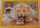 Diamond Painting Tijger-Panter - 50 x 40 cm - Volledig Pakket