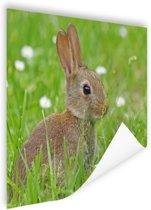 Haas in het gras afdruk Poster 90x60 cm - Foto print op Poster (wanddecoratie woonkamer / slaapkamer) / Dieren Poster