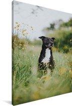 Een Staffordshire Bull Terrier tussen de gele bloemen Canvas 120x180 cm - Foto print op Canvas schilderij (Wanddecoratie woonkamer / slaapkamer) / Huisdieren Canvas Schilderijen XXL / Groot formaat!