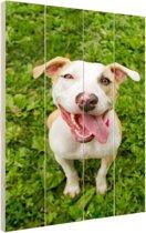 Pitbull in gras Hout 40x60 cm - Foto print op Hout (Wanddecoratie)