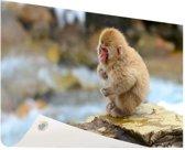 Japanse babysneeuwaap Tuinposter 60x40 cm - klein - Tuindoek / Buitencanvas / Schilderijen voor buiten (tuin decoratie)