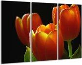 Glasschilderij Tulpen | Rood, Geel, Oranje | 120x80cm 3Luik | Foto print op Glas |  F001009
