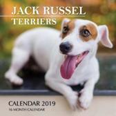 Jack Russel Terriers Calendar 2019