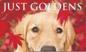 Golden Retriever Kalender 2020 Mini
