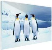FotoCadeau.nl - Drie pinguins portret Glas 90x60 cm - Foto print op Glas (Plexiglas wanddecoratie)