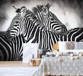 Fotobehang Black And White Zebras   VEM - 104cm x 70.5cm   130gr/m2 Vlies