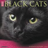 Just Black Cats 2020 Wall Calendar