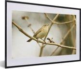 Foto in lijst - Een tjiftjaf op een tak van een boom fotolijst zwart met witte passe-partout 60x40 cm - Poster in lijst (Wanddecoratie woonkamer / slaapkamer)