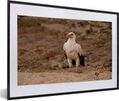 Foto in lijst - Mooie gierarend of palmarend in droog gebied fotolijst zwart met witte passe-partout 60x40 cm - Poster in lijst (Wanddecoratie woonkamer / slaapkamer)