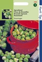 Hortitops Zaden - Spruitkool Groninger
