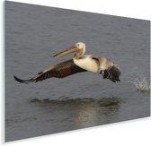 Jonge Roze pelikaan vliegt uit het water Plexiglas 180x120 cm - Foto print op Glas (Plexiglas wanddecoratie) XXL / Groot formaat!