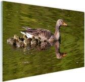 Ganzen in het water Glas 180x120 cm - Foto print op Glas (Plexiglas wanddecoratie) XXL / Groot formaat!