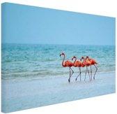 Roze flamingos in het water  Canvas 60x40 cm - Foto print op Canvas schilderij (Wanddecoratie woonkamer / slaapkamer) / Dieren Canvas Schilderijen