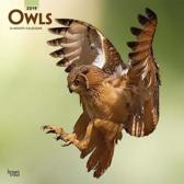 Owls Kalender 2019