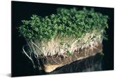 De groene tuinkers met een zwarte achtergrond Aluminium 120x80 cm - Foto print op Aluminium (metaal wanddecoratie)