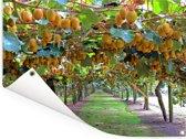 Kiwi rijpen aan de boom in zonovergoten boerderijen Tuinposter 40x30 cm - klein - Tuindoek / Buitencanvas / Schilderijen voor buiten (tuin decoratie)