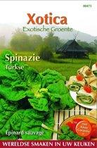 Xotica Spinazie