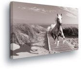Horse Beach Grey Canvas Print 60cm x 40cm