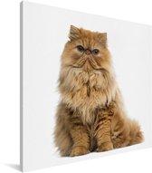 Oranje Perzische kat op een witte achtergrond Canvas 90x90 cm - Foto print op Canvas schilderij (Wanddecoratie woonkamer / slaapkamer) / Huisdieren Canvas Schilderijen