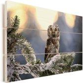 Ruigpootuil in een winterlandschap Vurenhout met planken 120x80 cm - Foto print op Hout (Wanddecoratie)