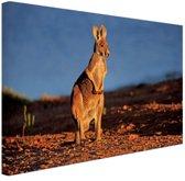 Rode kangoeroe in nationaal park Canvas 80x60 cm - Foto print op Canvas schilderij (Wanddecoratie)