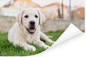 Witte Labrador Retriever die in het gras ligt Poster 180x120 cm - Foto print op Poster (wanddecoratie woonkamer / slaapkamer) / Huisdieren Poster XXL / Groot formaat!