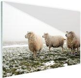 Drie schapen in de winter Glas 30x20 cm - Foto print op Glas (Plexiglas wanddecoratie)