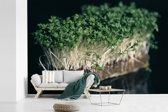 Fotobehang vinyl - De groene tuinkers met een zwarte achtergrond breedte 420 cm x hoogte 280 cm - Foto print op behang (in 7 formaten beschikbaar)