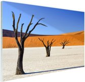 Boompjes in woestijn Glas 180x120 cm - Foto print op Glas (Plexiglas wanddecoratie) XXL / Groot formaat!