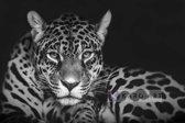 Schilderij - Jaguar in zwart en wit