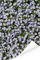 Lichte lange ereprijs bloemen Poster 20x30 cm - klein - Foto print op Poster (wanddecoratie woonkamer / slaapkamer)
