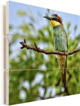 Een kleurrijke bijeneter in Afrika zit op een takje Vurenhout met planken 160x120 cm - Foto print op Hout (Wanddecoratie) XXL / Groot formaat!
