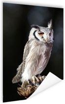 Dwergooruil Poster 40x60 cm - Foto print op Poster (wanddecoratie woonkamer / slaapkamer) / Dieren Poster