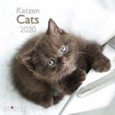 Katten - Cats Kalender 2020 incl. jaarposter