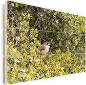 Timalia hoog in een boom Vurenhout met planken 60x40 cm - Foto print op Hout (Wanddecoratie)