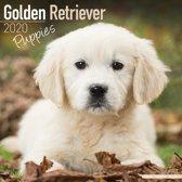 Golden Retriever Kalender Puppies 2020
