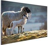 FotoCadeau.nl - Moeder met lam Aluminium 90x60 cm - Foto print op Aluminium (metaal wanddecoratie)