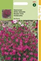 Hortitops Zaden - Steenanjer Brilliant (Dianthus deltoides)