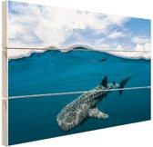 FotoCadeau.nl - Walvishaai aan de oppervlakte Hout 80x60 cm - Foto print op Hout (Wanddecoratie)