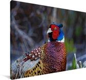 Een kleurrijke fazant in de natuur Canvas 180x120 cm - Foto print op Canvas schilderij (Wanddecoratie woonkamer / slaapkamer) XXL / Groot formaat!