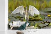 Fotobehang vinyl - Ralreiger op waterplanten met gestrekte vleugels breedte 360 cm x hoogte 240 cm - Foto print op behang (in 7 formaten beschikbaar)