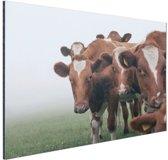 Groep nieuwsgierige koeien Aluminium 60x40 cm - Foto print op Aluminium (metaal wanddecoratie)