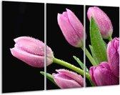 Glasschilderij Tulpen | Roze, Zwart, Groen | 120x80cm 3Luik | Foto print op Glas |  F005789