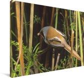 Kleurrijke baardman in een bos Canvas 90x60 cm - Foto print op Canvas schilderij (Wanddecoratie woonkamer / slaapkamer)