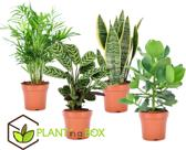 PLANT IN A BOX Oersterke kamerplanten mix - Set van 4 stuks - pot ⌀12 cm - Hoogte ↕ 30 - 40 cm